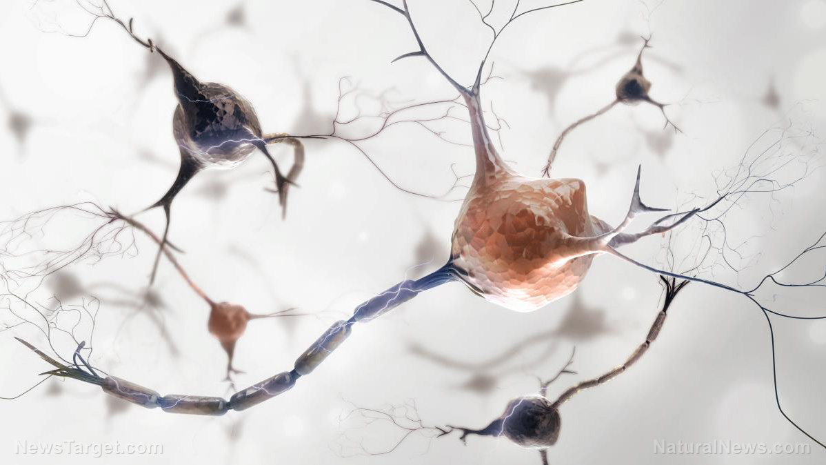 """Image: Graphene-based """"neuromodulation"""" technology is REAL: Press release from INBRAIN Neuroelectronics describes brain controlling biocircuits using AI-powered graphene"""